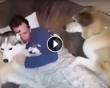 Un bărbat se preface că-l iubește pe unul dintre cățeii lui mai mult decât pe celălalt. Reacția câinelui te va face să râzi cu poftă!