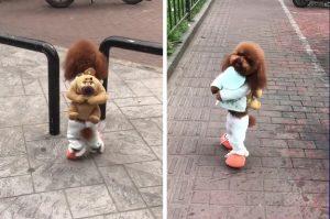 Viralul zilei: un câine este de neoprit! Uite ce face / VIDEO