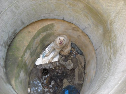 Poveste cu happy-end pentru o cățelușă aruncată într-un canal