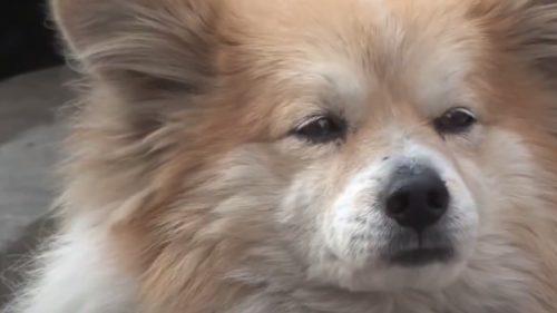 LOIALITATE: Un cățel stă de 3 ani, în același loc, așteptându-și stăpâna… care este foarte bolnavă