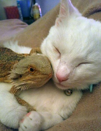 Prietenia adevărată dintre un dragon și o pisică nu ține cont de nimic. Ele au ÎNDUIOȘAT toată lumea