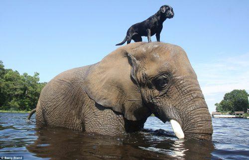 Un elefant şi un câine s-au cunoscut în circumstanţe tragice. Ce s-a întâmplat mai departe este pur şi simplu uimitor! VIDEO