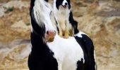 IMAGINI ce au înduioșat lumea! Dacă ești cu adevărat un iubitor de animale aceste fotografii îți vor tăia RESPIRAȚIA!