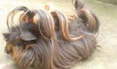 Ce au în comun Rapunzel, Ariana Grande și un porcușor de Guineea? I FOTOGRAFII SENZAȚIONALE