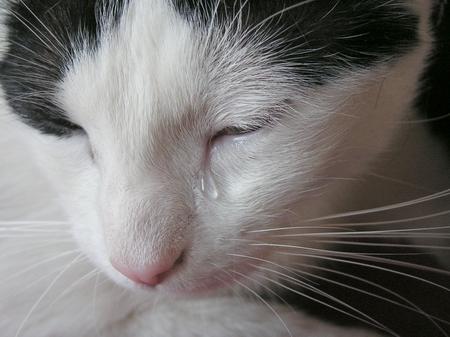 Lacrimile unei pisici au în spate un motiv care a zguduit planeta. Legătura de dincolo