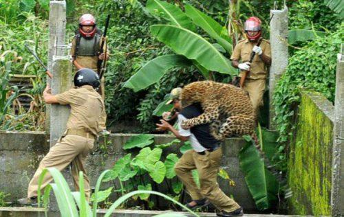 Un animal deosebit de periculos a terorizat a cincea oară un oraș din India