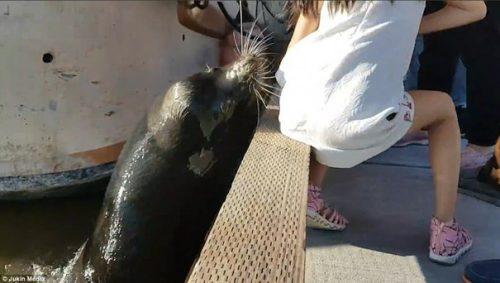Moment ȘOCANT pentru o fetiță, după ce un leu de mare a tras-o în mare. Vezi ce s-a întâmplat cu ea
