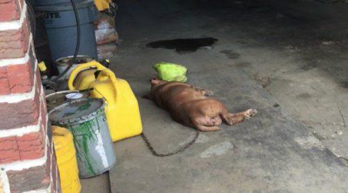 Șocant! Nu o să îți vină să crezi câți ani a stat Lola într-un garaj, fără lumină, forțat să doarmă pe podeaua de beton