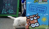 O galerie foto care te va amuza instant! Momente vesele cu animale