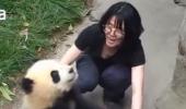 Un PANDA a făcut SPECTACOL într-un parc zoo din China. Imaginile au făcut furori printre internauți! VIDEO