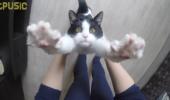 """O felină adoptată își salută stăpânul în fiecare zi și îi spune """"MULȚUMESC"""" în cel mai dulce mod!!!"""