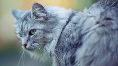 Aventura unei pisici a ajuns subiect de discuție în toată lumea. Uite cum a fost salvată I VIDEO