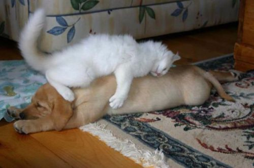 Cele mai AMUZANTE poze cu pisici care dorm pe căței I GALERIE FOTO