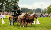 Începe FESTIVALUL Karpatia Pony Show 2017,  pe Domeniul Cantacuzino din Floreşti. Poneii vor face spectacol!