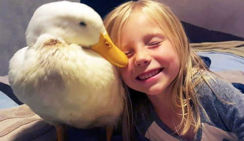Legătura SUPREMĂ dintre o copilă și animalul ei de companie I IMAGINI EMOȚIONANTE
