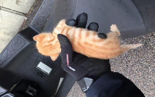 """Un elev și-a pus CÂINELE să OMOARE o pisică. Cazul l-a lăsat mască pe purtătorul de cuvânt IPJ Bihor: """"Nu am mai avut astfel de cazuri…"""""""