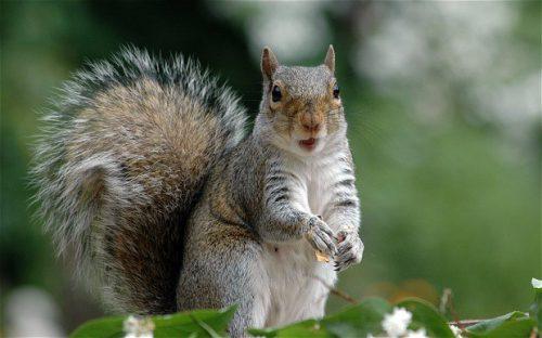 Un caz care a uimit o lume întreagă! De ce a omorât o veveriță? Motivul este SCANDALOS!