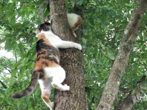 Ce face o pisică atunci când îşi vede puiul în pericol I VIDEO