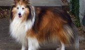 Topul celor mai inteligente 6 rase de câini. Află pe ce loc se află cățelul tău