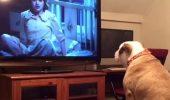 Faceți cunoștință cu Khaleesi, bulldogul care se uită la filme de groază. Uite cum reacționează I VIDEO