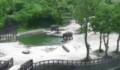 VIDEO EMOȚIONANT! Un pui de elefant a fost salvat de la ÎNEC în ultima clipă