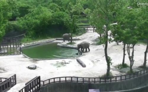 VIDEO EMOȚIONANT! Cum a fost SALVAT un pui de elefant de la ÎNEC