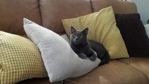 """CÂȘTIGĂTOR """"Miau, Miau, Foto!"""": SURPRIZĂ de proporții, cine a câștigat cel mai râvnit premiu al concursului FOTO al felinelor organizat de Animal Zoo"""
