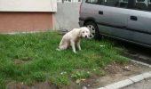 Câine preluat de hingheri și UCIS la jumătate de oră după capturare