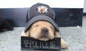 El va fi cel mai INSTRUIT câine de poliție I FOTO-VIDEO