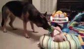 Și-au lăsat bebelușul cu CÂINELE LUP. Momentul a devenit viral pe Facebook I VIDEO