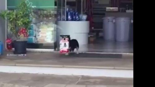 Ce părere ai? Ți-ai dori ca animalul tău de companie să meargă la cumpărături în locul tău?