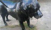FOTO! Un cățel a scăpat cu viaţă, după ce a fost găsit într-o stare critică