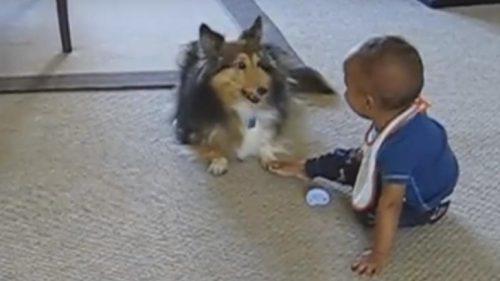 Un CĂŢELUŞ TRĂSNIT provoacă RÂSUL în hohote unui bebeluș. Sunt ATÂT DE GINGAŞI, încât au CUCERIT TOATĂ LUMEA I VIDEO