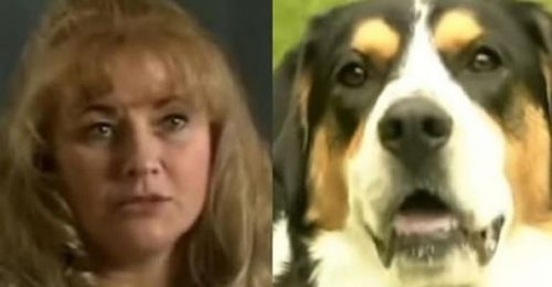 Câinele EROU. Cum și-a salvat Patch salvat familia de la incendiu