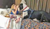 INCREDIBIL! A devenit un câine EROU. Cum a ajutat o fetiță cu o boală extrem de rară