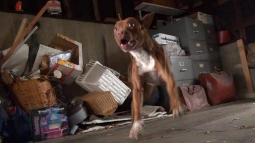 EMOȚIONANT! Cum a fost salvată o cățelușă dintr-un garaj I VIDEO