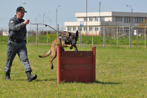 SID, unul dintre cei mai performanți câini ai Vămii Române, iese la pensie I VOTO