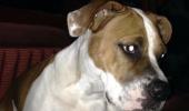 """Mesajul care a SCANDALIZAT un CONTINENT: """"Am nevoie să-mi împuște cineva câinele, nimeni nu are curajul să o facă"""""""