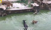 Șocant! Au ucis un animal pentru distracția vizitatorilor