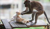Viralul zilei: Maimuțe vs pisici și câini. Imaginile care au stârnit HOHOTE de râs în toată lumea | VIDEO
