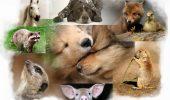Uite de ce animalele văd lumea diferit faţă de oameni