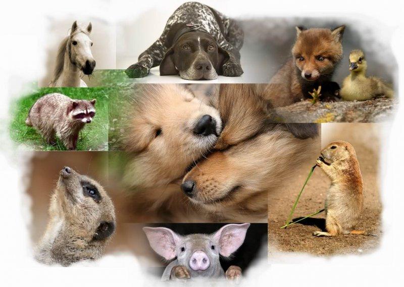 care animal are cea mai bună vedere