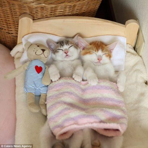 Clipul cu aceste pisici a devenit VIRAL PE INTERNET. Ei nu pot dormi decât împreună / GALERIE FOTO-VIDEO