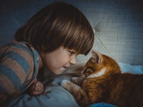 Pisicile încearcă să demonstreze proprietarilor că sunt cele mai bune animale de companie I GALERIE FOTO