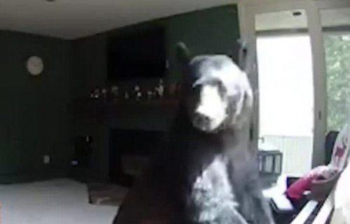 Momentul care a creat ISTERIE în toată lumea. Ai mai văzut urși care să cânte la pian?