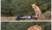 Uite ce METODĂ INEDITĂ a folosit o tânără pentru salvarea unui căţel înfometat