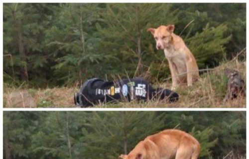 Metodă inedită folosită de o tânără pentru salvarea unui căţel înfometat
