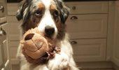 Animalele de companie care DORM cu JUCĂRIILE lor preferate. Sunt adorabile! I GALERIE FOTO