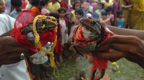 Nuntă cu FAST în India. Uite cine sunt mirii