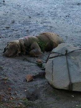 Un bărbat şi-a omorât câinele în cel mai BARBAR MOD cu putință! Uite ce au făcut cei care l-au văzut